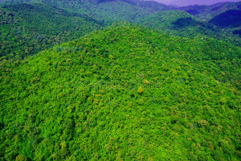 Aerial view of forest. Aerial view of the forest stock photo