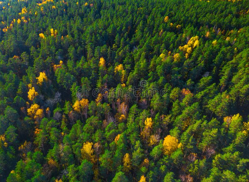 Aerial view of forest during calm autumn day stock image
