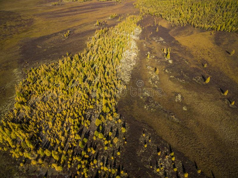 Aerial view of forest in the far East, Russia royalty free stock photography