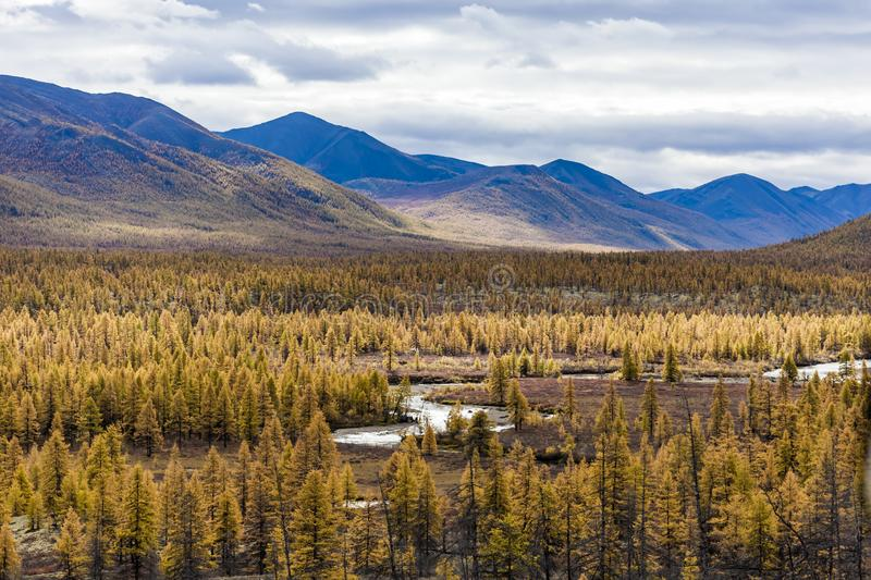 Aerial view of forest in the far East, Russia stock images