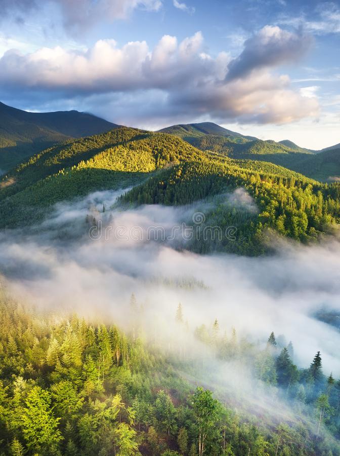 Aerial view at the forest in fog. Beautiful natural aerial landcape at the summer time. Forest and mountains.Top view from drone. stock photo