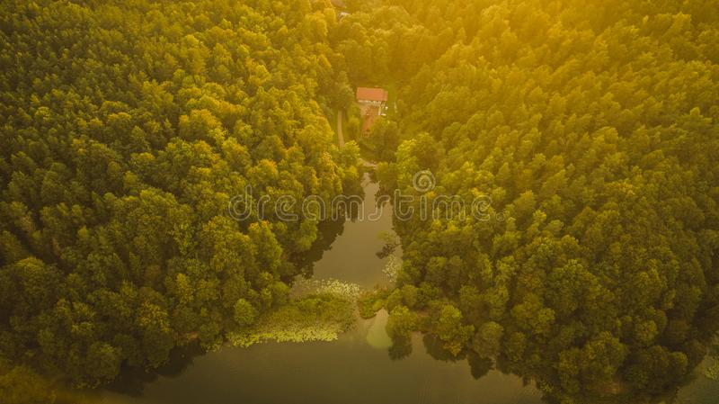 Aerial view of forest and lake during summer sunset royalty free stock images