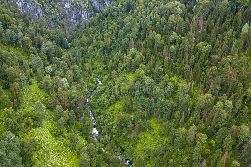 Aerial view of forest with a lot of green coniferous trees between Altai Mountains with a stream or small river with rapids and. Stones in canyon of the rocks stock images