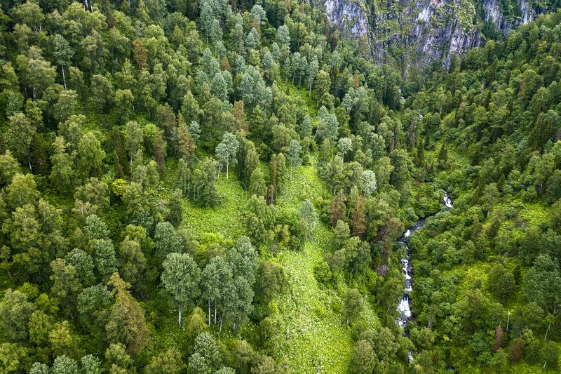 Aerial view of forest with a lot of green coniferous trees between Altai Mountains with a stream or small river with rapids and. Stones in canyon of the rocks stock image