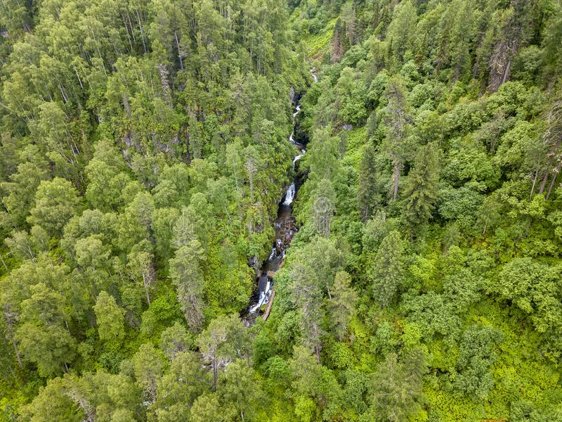 Aerial view of forest with a lot of green coniferous trees between Altai Mountains with a stream or small river with rapids and. Stones in canyon of the rocks royalty free stock photos