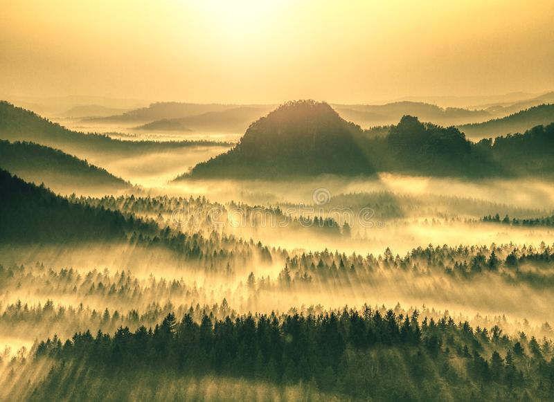 Aerial view of forest shrouded in morning fog royalty free stock images