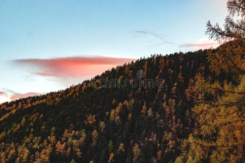 Aerial View of Forest during Sunset stock photos