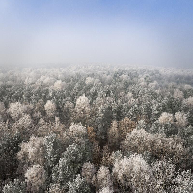 Aerial view of forest in winter stock photos