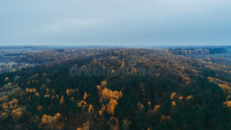 Aerial view of the forest. Yellow trees. Aerial view of the forest. Yellow and green trees. Autumn. Sky royalty free stock image