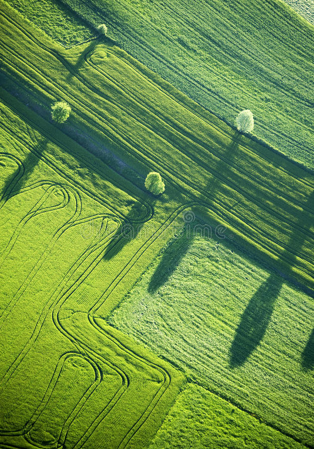 Aerial View : Four trees and shadows in a field royalty free stock images