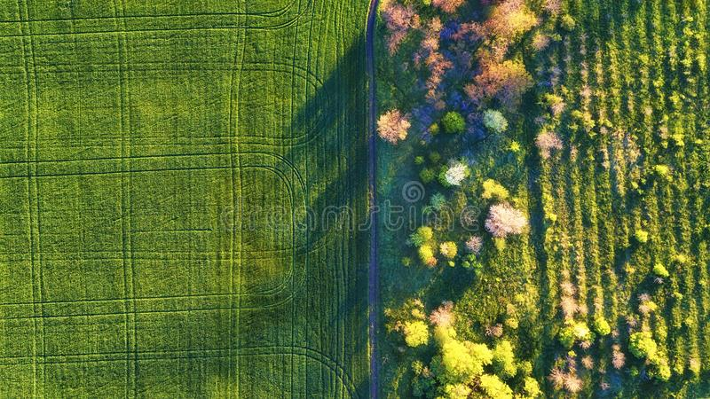 Aerial view at the garden and field. Agricultural landscape from air. Field and garden. Farm at summer time. Drone photography. stock photo