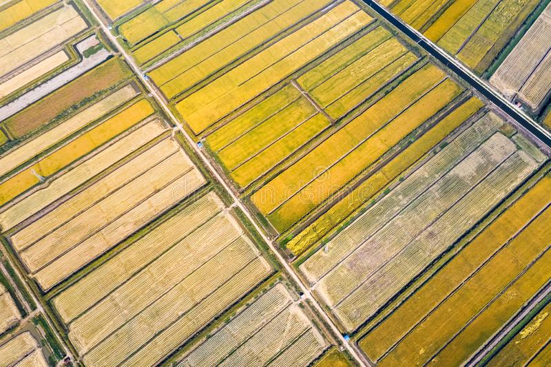 Golden paddy field in autumn. Aerial view of golden paddy field in autumn stock photo