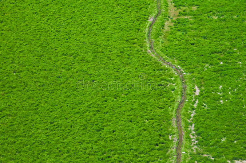 Aerial view of green fields stock photography