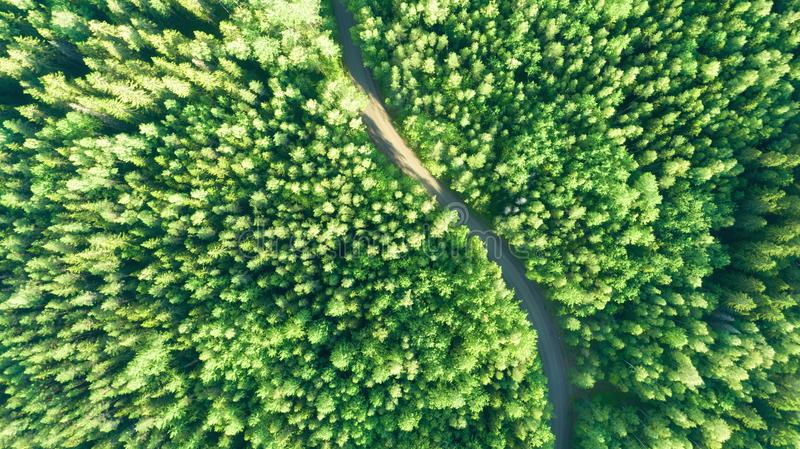 Aerial view of green summer forest road. Curved road from above. royalty free stock images