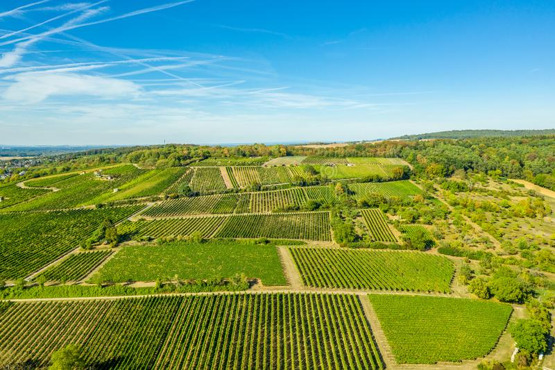 Aerial view of a green summer vineyard royalty free stock images