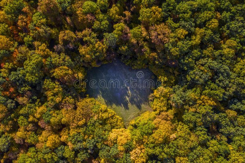 Aerial view of heart shaped forest lawn. At autumn from a drone royalty free stock photos