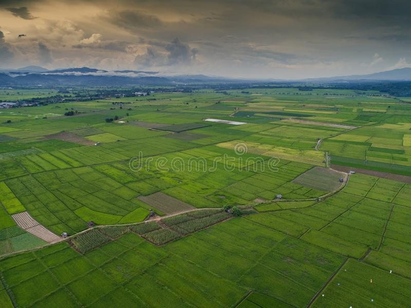 Aerial view high angle view of Field in Thailand stock photo
