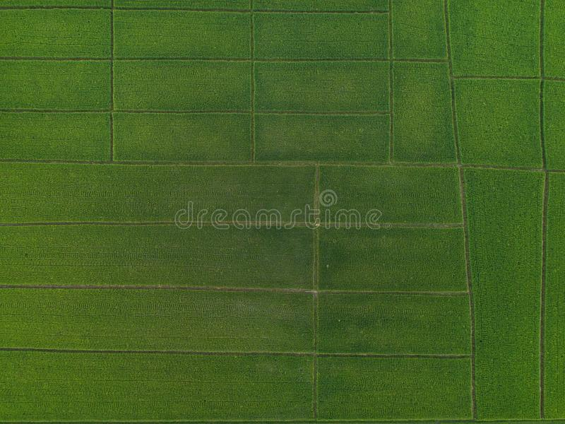 Aerial view high angle view of Field in Thailand royalty free stock images