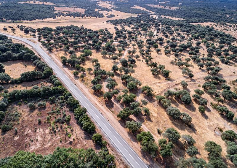 Aerial view of holm oak forest and road royalty free stock photos