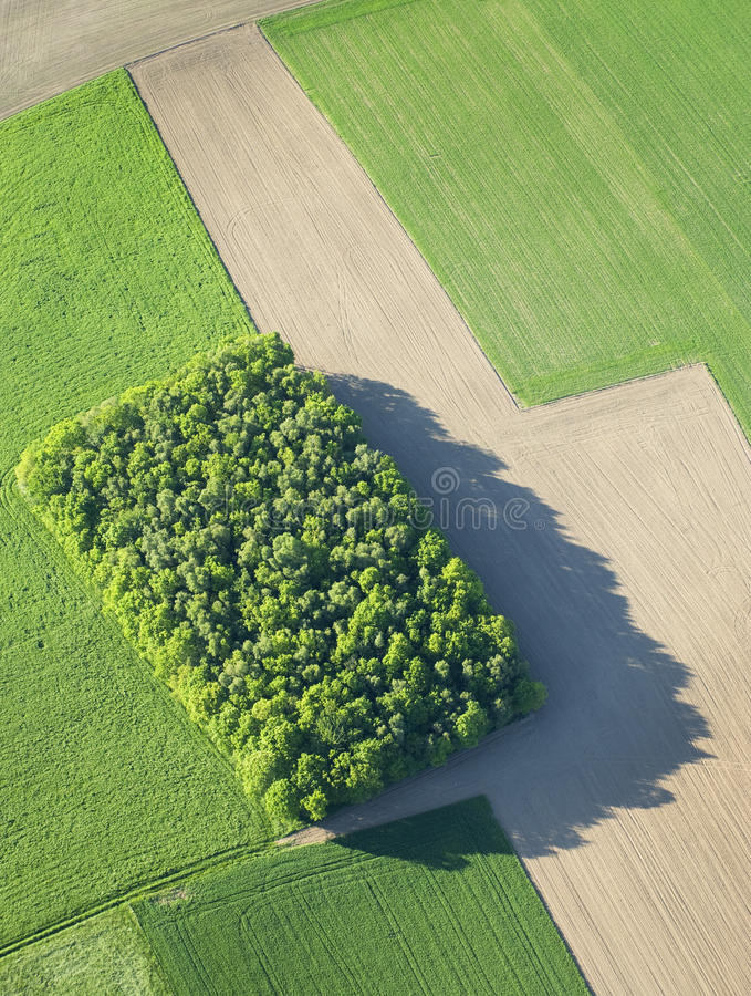 Aerial View : Isolated wood in fields. With his shadow royalty free stock image