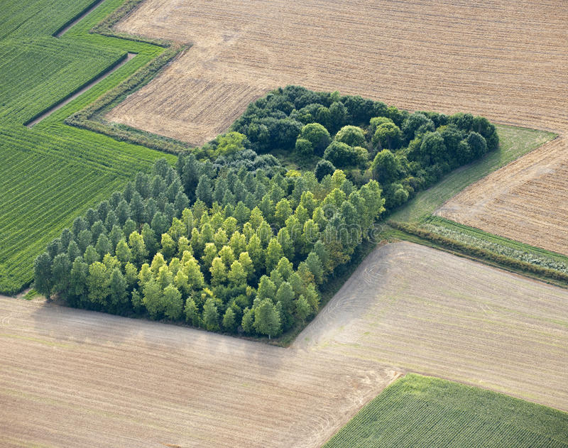 Aerial View : isolated wood in fields. With nice cultivation lines stock photography