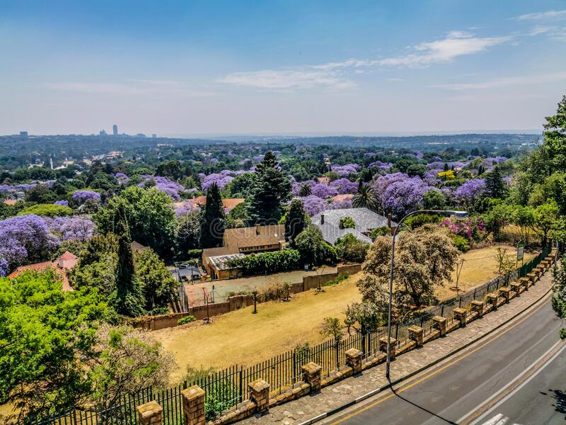 Aerial view of Johannesburg , the largest urban forest during Spring - Jacaranda blooming in October in South Africa. Aerial view of Johannesburg , the largest stock photography