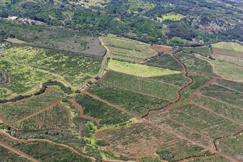 Aerial view of Kauai south coast showing coffee plantations near Poipu Kauai Hawaii USA stock photo
