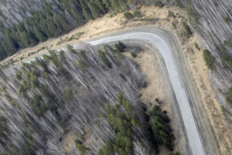 Aerial view of larch and conifer forest in spring. stock image