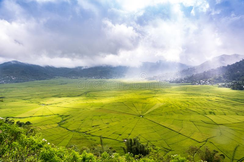 Aerial View of Lingko Spider Web Rice Fields While Sunlight Piercing Through Clouds to the Field. With Raining. Flores, East Nusa Tenggara, Indonesia royalty free stock photos