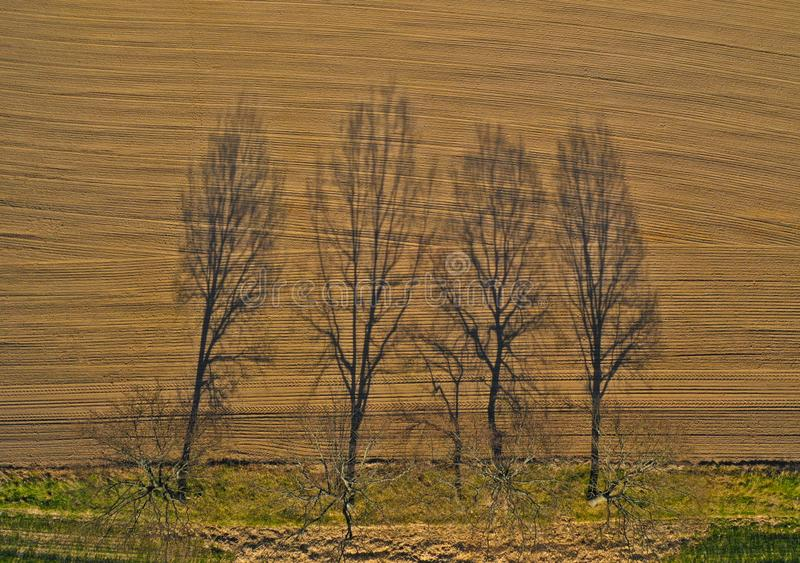 Aerial view on long tree shadow growing on meadow, close to rural field royalty free stock images