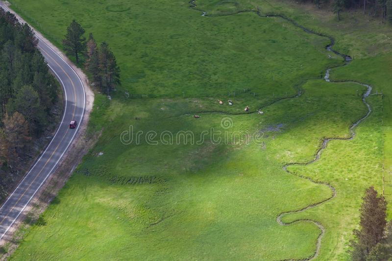 Aerial View of Longhorn Cattle royalty free stock photos