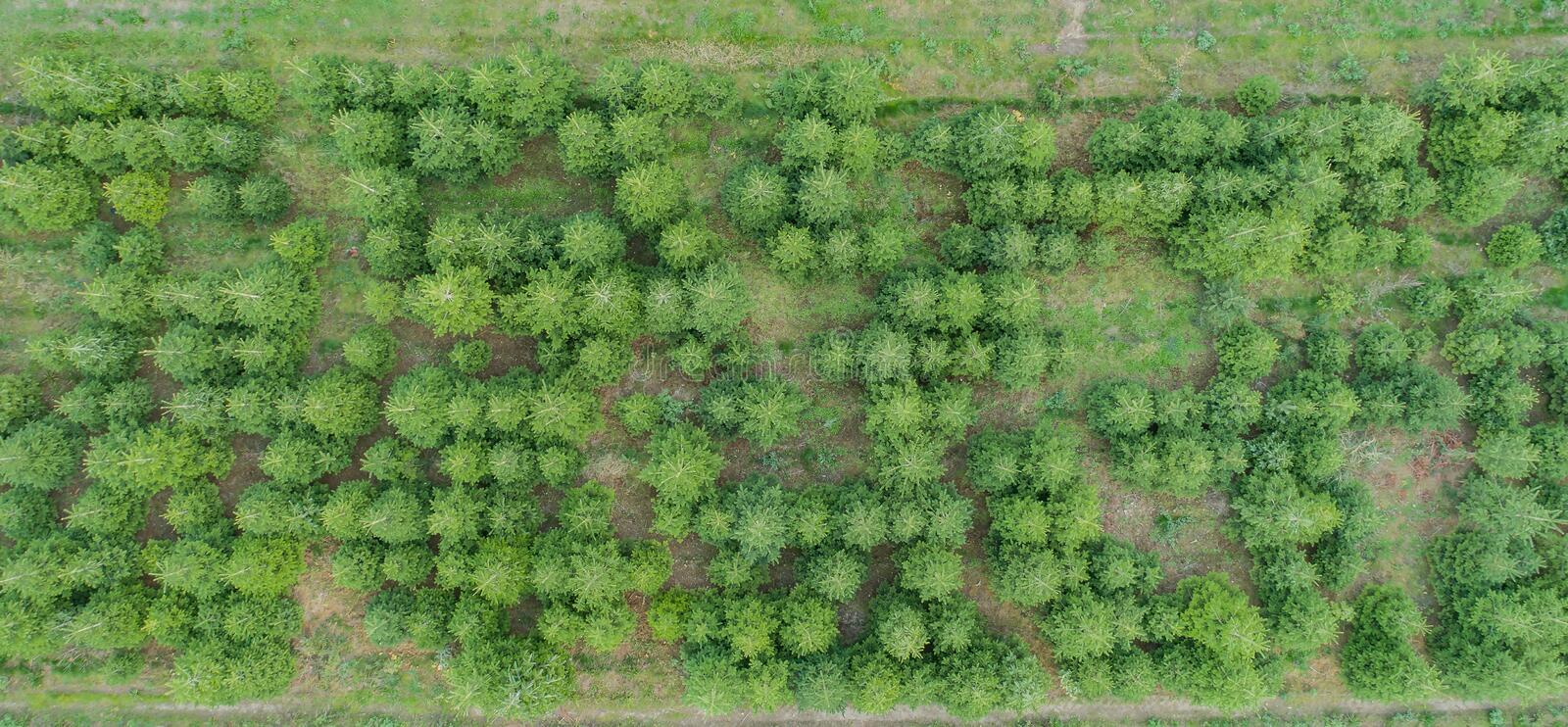 Aerial view of a mixed forest.  royalty free stock photography
