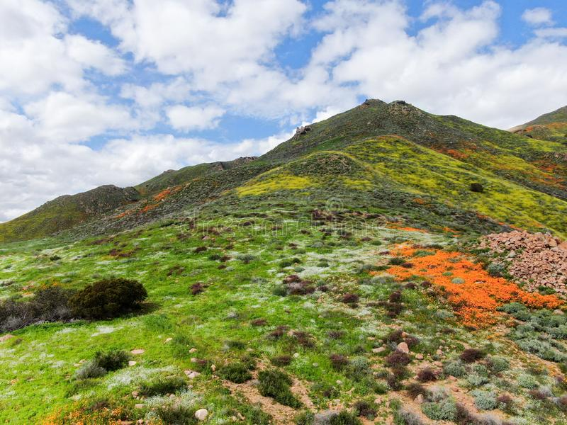 Aerial view of Mountain with California Golden Poppy and Goldfields blooming in Walker Canyon, Lake Elsinore, CA. USA. stock image