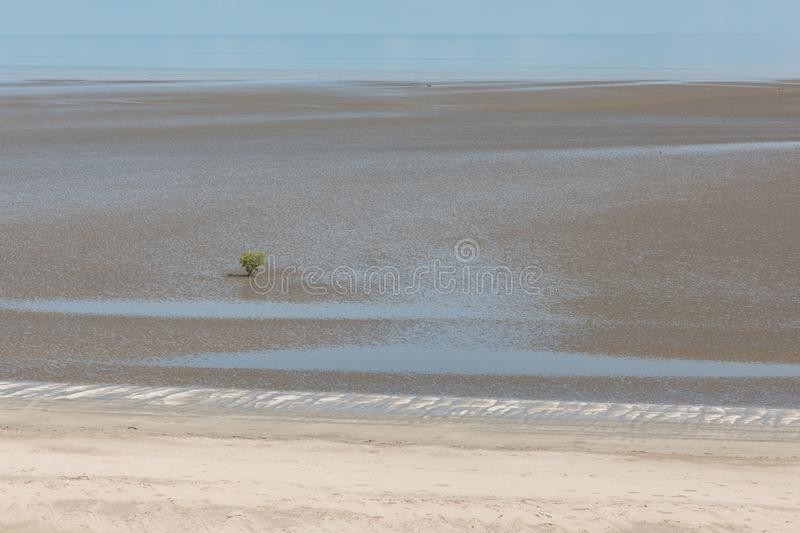 Aerial view of the mudflat coastline at low tide with water winding through the mud and lone mangrove. Darwin, Northern Territory, Australia royalty free stock photography