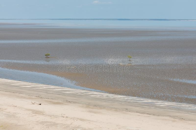 Aerial view of the mudflat coastline at low tide with water winding through the mud and lone mangrove. Darwin, Northern Territory, Australia stock photos