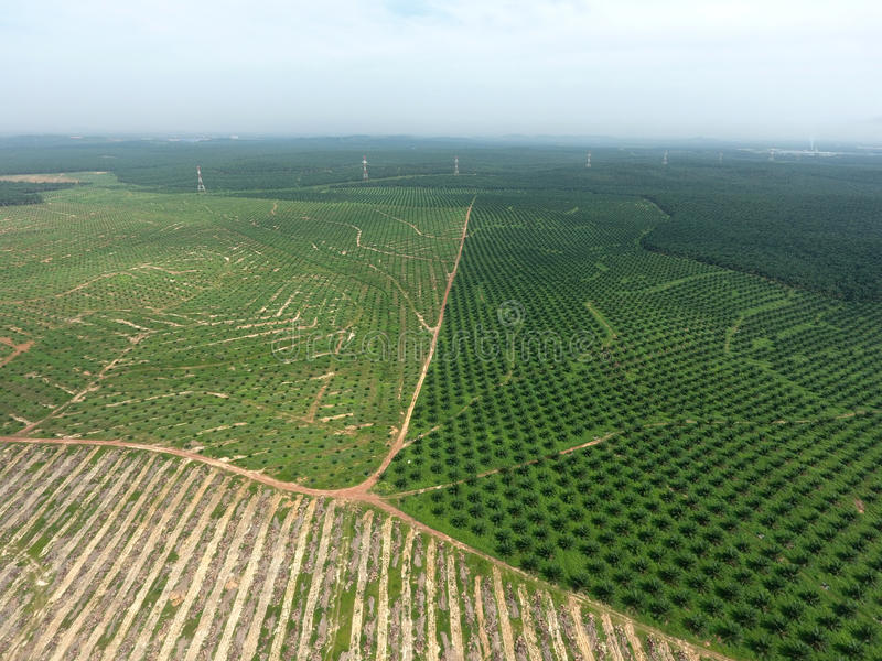 Aerial view of oil palm plantation stock photo