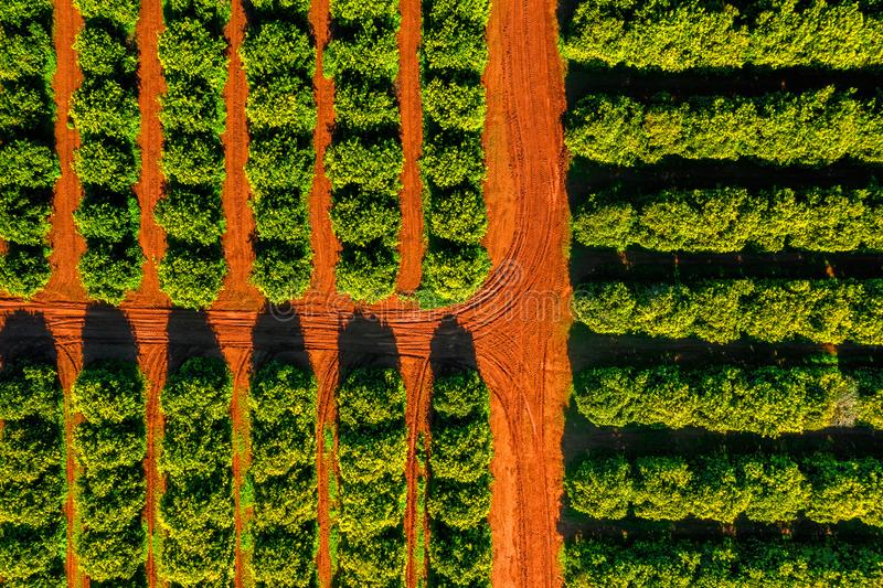 Aerial view of orange grove farm field.  stock photography