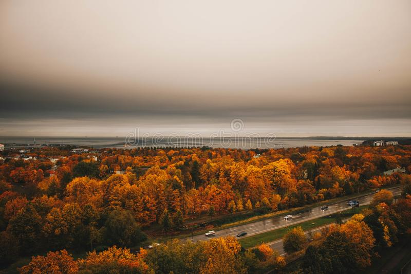 Aerial View of Orange Trees stock image