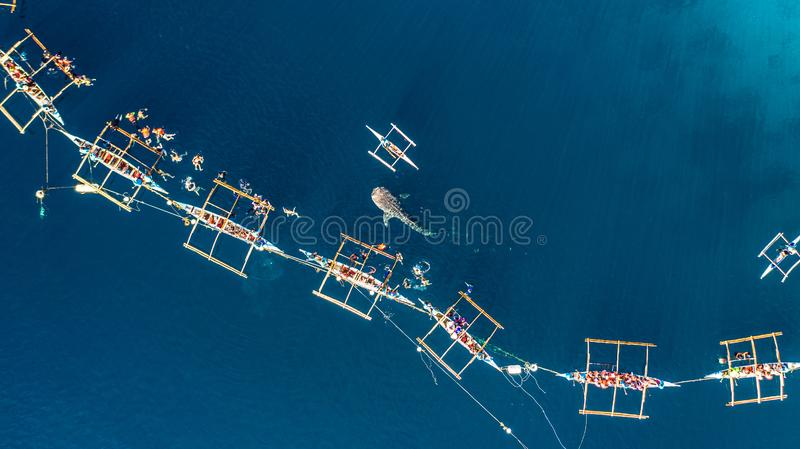 Aerial view Oslob Whale Shark Watching, Fishermen feed gigantic whale sharks  Rhincodon typus from boats in the sea in the Oslob stock photography