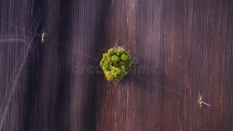 Aerial view over agricultural beveled fields and tree royalty free stock photo