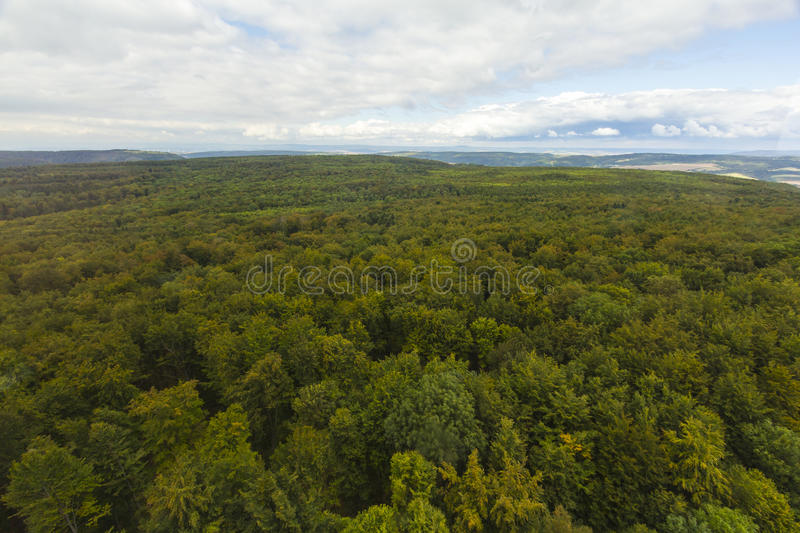 Aerial view over a forest stock image. Image of forest ...