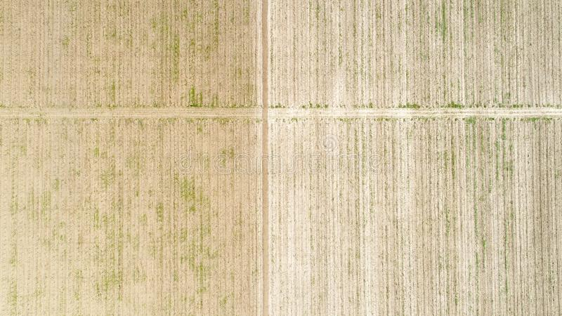 Aerial view over field of crop, premature stock photos