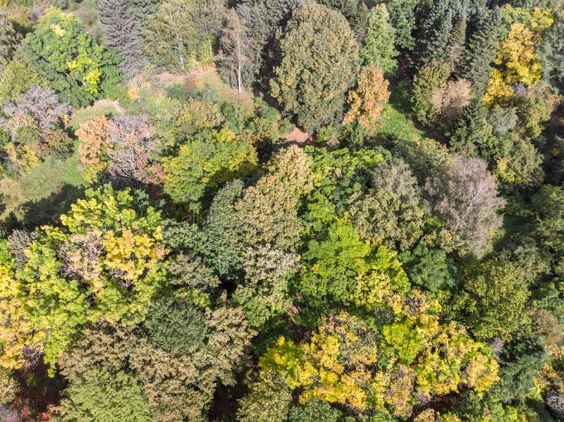 Aerial view over trees in autumn forest. With vibrant colors leaves stock photo