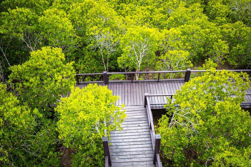 Aerial view over walkway inside tropical forest. Aerial view over wooden walkway inside tropical mangrove forest royalty free stock photos