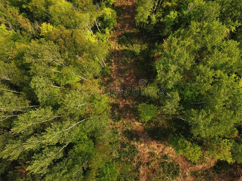 Aerial view of path in boreal forest stock photos