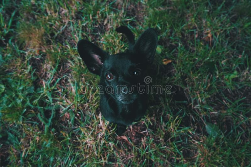 Aerial View Photography of Black Puppy on Green stock photography