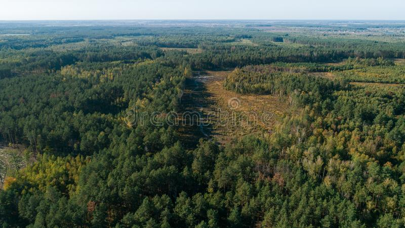 Aerial view of the pine forest and a meadow with a winding road royalty free stock image
