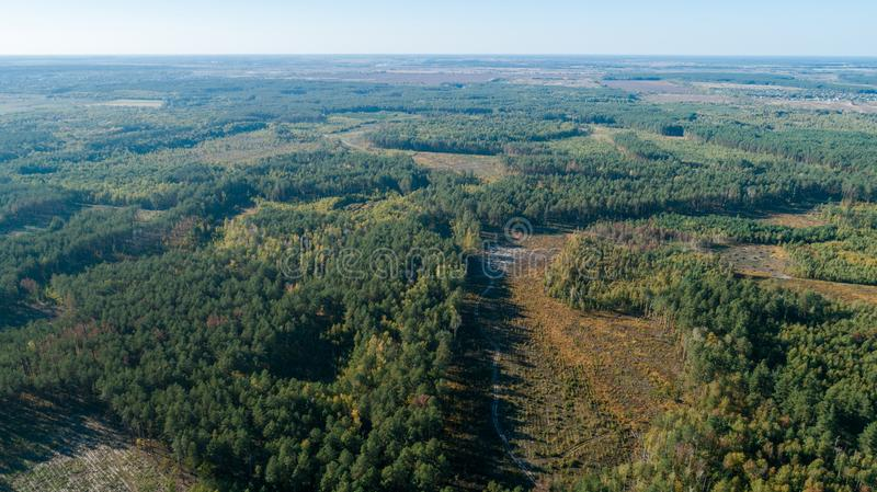 Aerial view of the pine forest and a meadow with a winding road royalty free stock photo