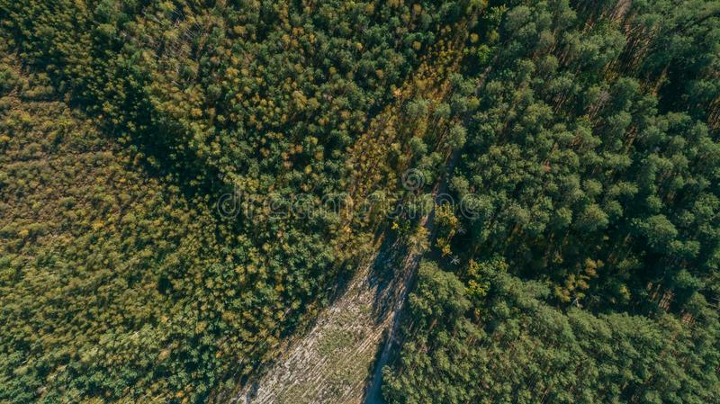 Aerial view of the pine forest and a meadow with a winding road stock photography