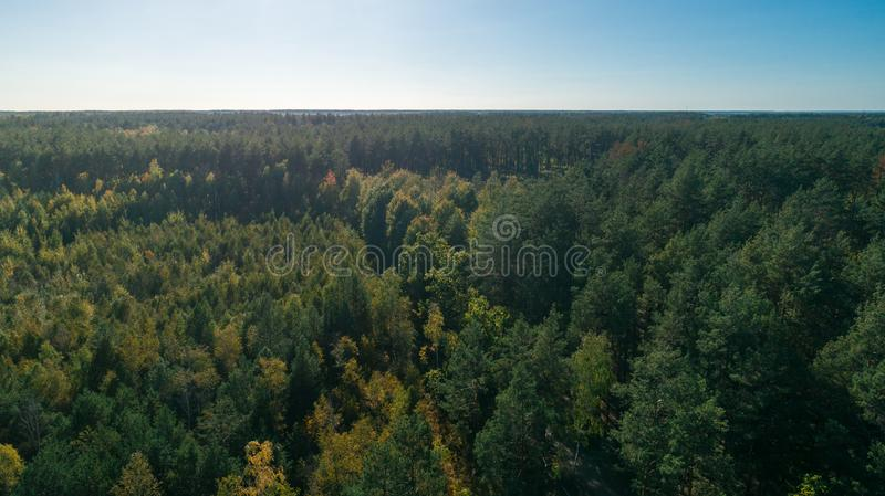 Aerial view of the pine forest stock photos